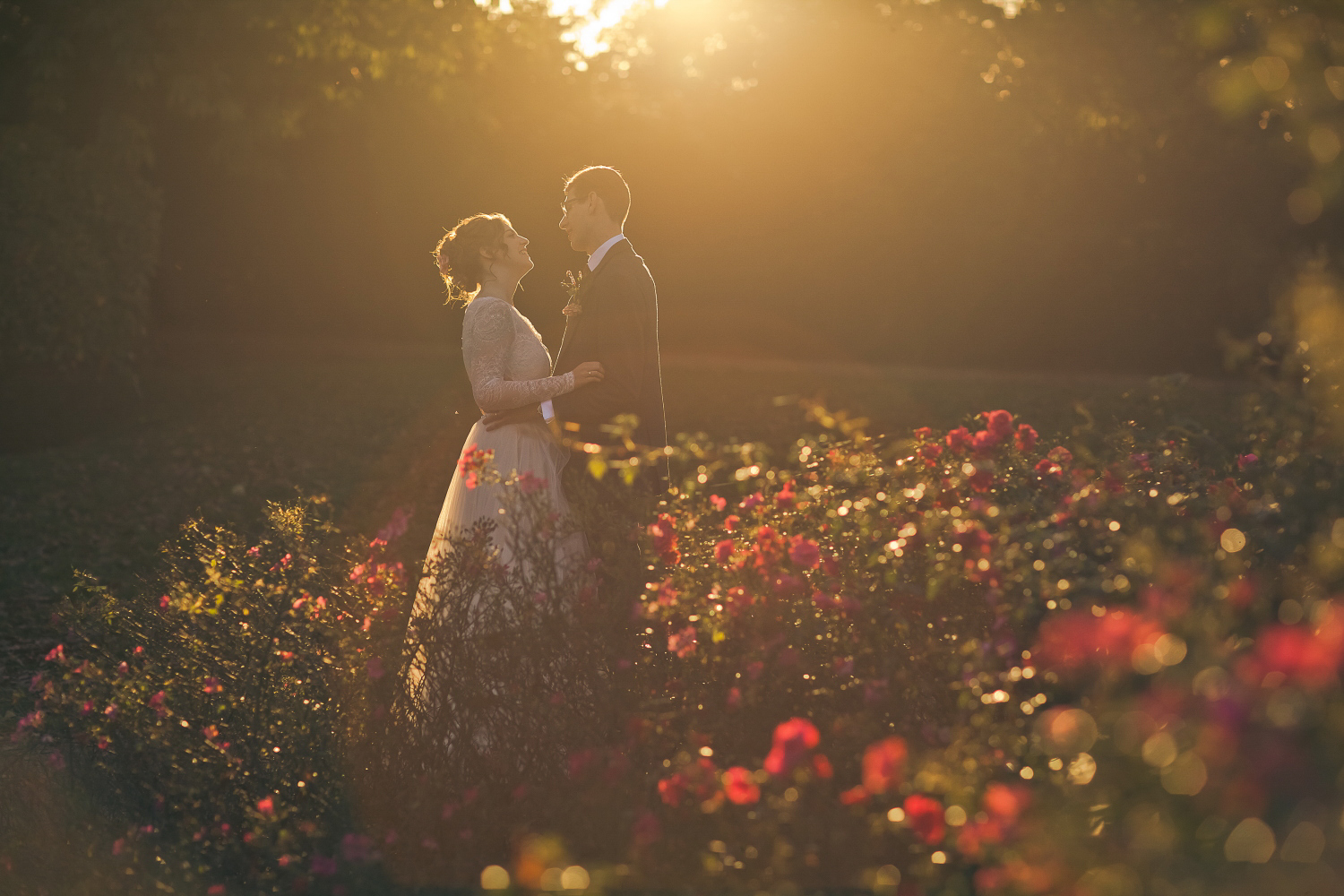 A beautiful photo of a bride and groom, shooting towards the sun, with roses in the foreground